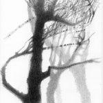 Liliane Camier -Parc Montsouris Dessin mine graphite sur papier Arches 300gr - 28 cm x 17 cm